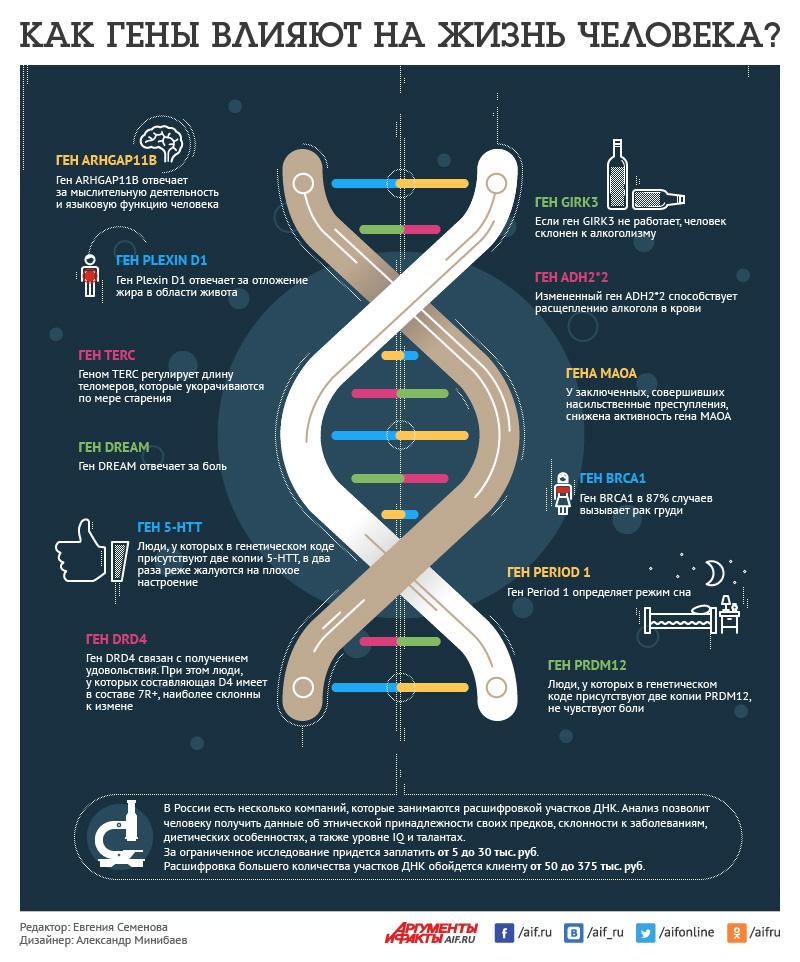 как гены влияют на жизнь человека (инфографика)