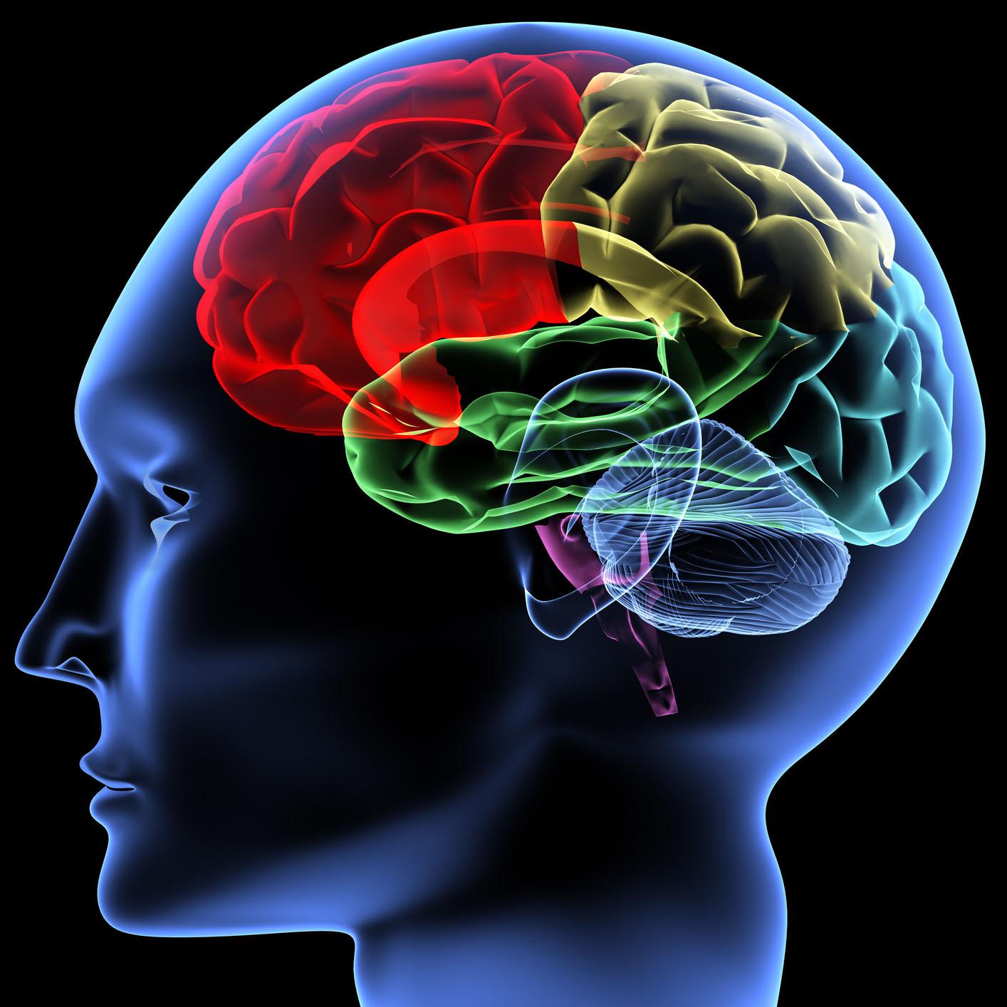 14 фактов, доказывающих то, что ваш мозг работает намного сложнее и интереснее, чем вы думаете