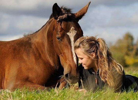 Ученые: лошади понимают эмоции человека