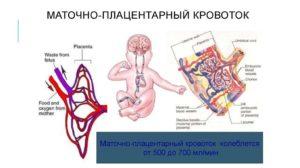 маточно-плацентарный кровоток