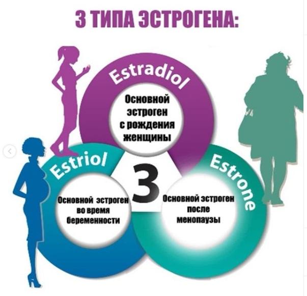 3 типа эстрогена